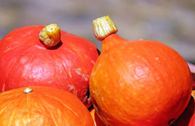 pumpkin hokkaidokurbis fruit orange preview
